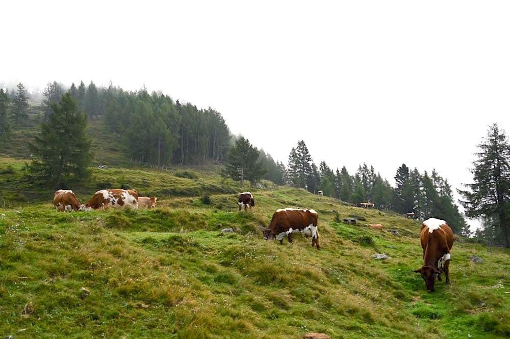 millstaetter see wandern urlaub tipps 20 - Millstätter See: Wandern & Genuss am Granattor