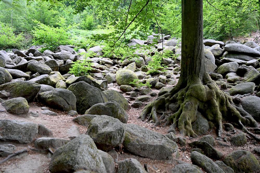 felsenmeer odenwald 16 - Das Felsenmeer in Lautertal im Odenwald