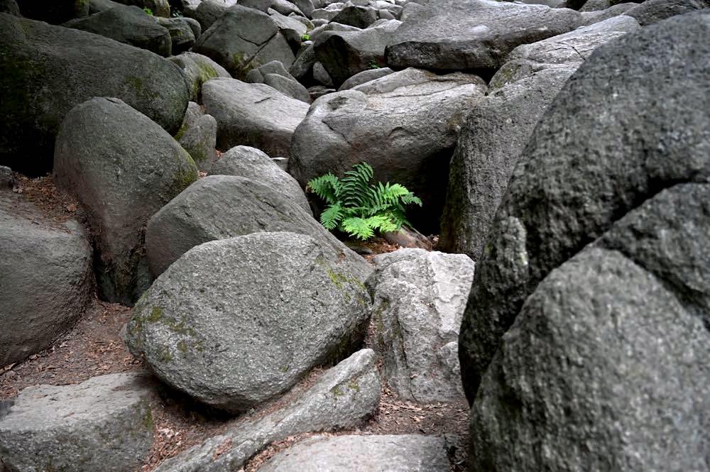 felsenmeer odenwald 8 - Das Felsenmeer in Lautertal im Odenwald