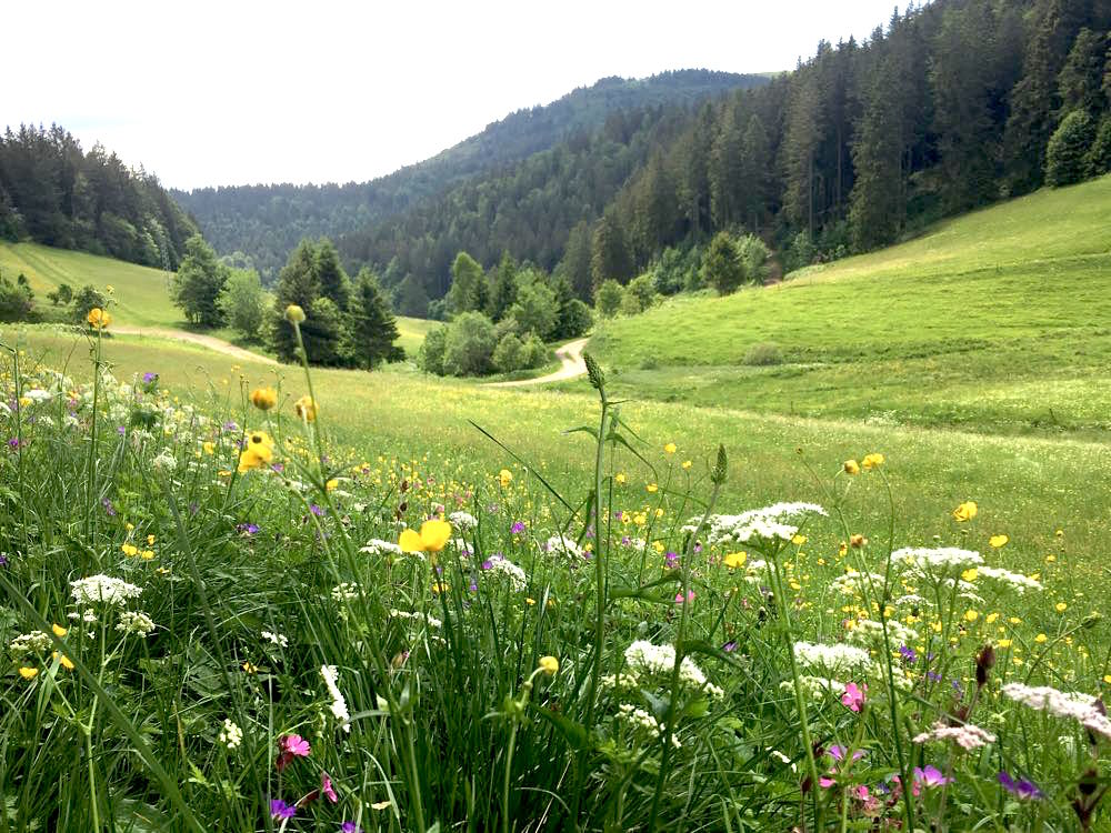 belchensteig geniesserpfad schwarzwald 14 - Genießerpfad Belchensteig im Schwarzwald