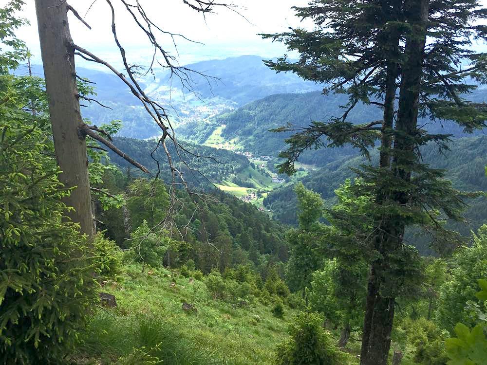 belchensteig geniesserpfad schwarzwald 8 - Genießerpfad Belchensteig im Schwarzwald