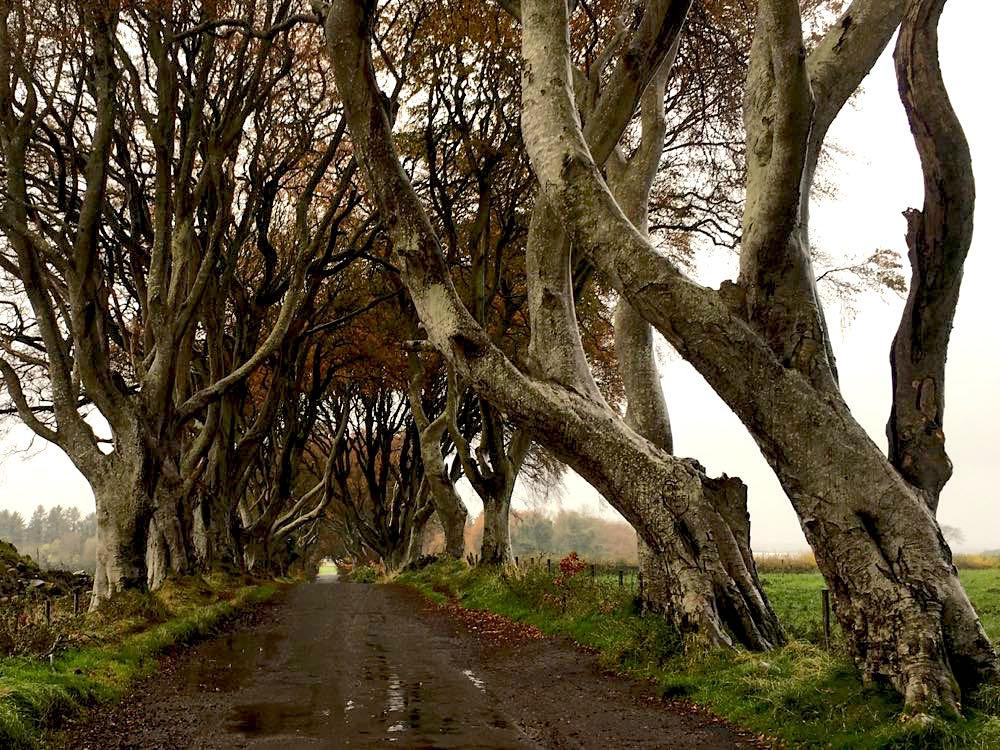 dark hedges nordirland 1 - Dark Hedges: Highlight in Nordirland