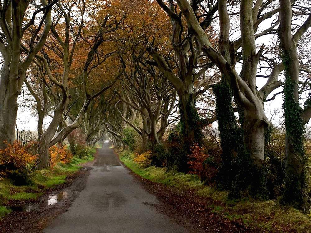 dark hedges nordirland 3 - Dark Hedges: Highlight in Nordirland