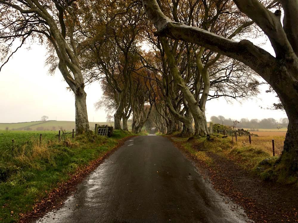 dark hedges nordirland 4 - Dark Hedges: Highlight in Nordirland