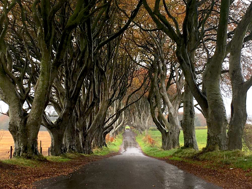 dark hedges nordirland 5 - Dark Hedges: Highlight in Nordirland