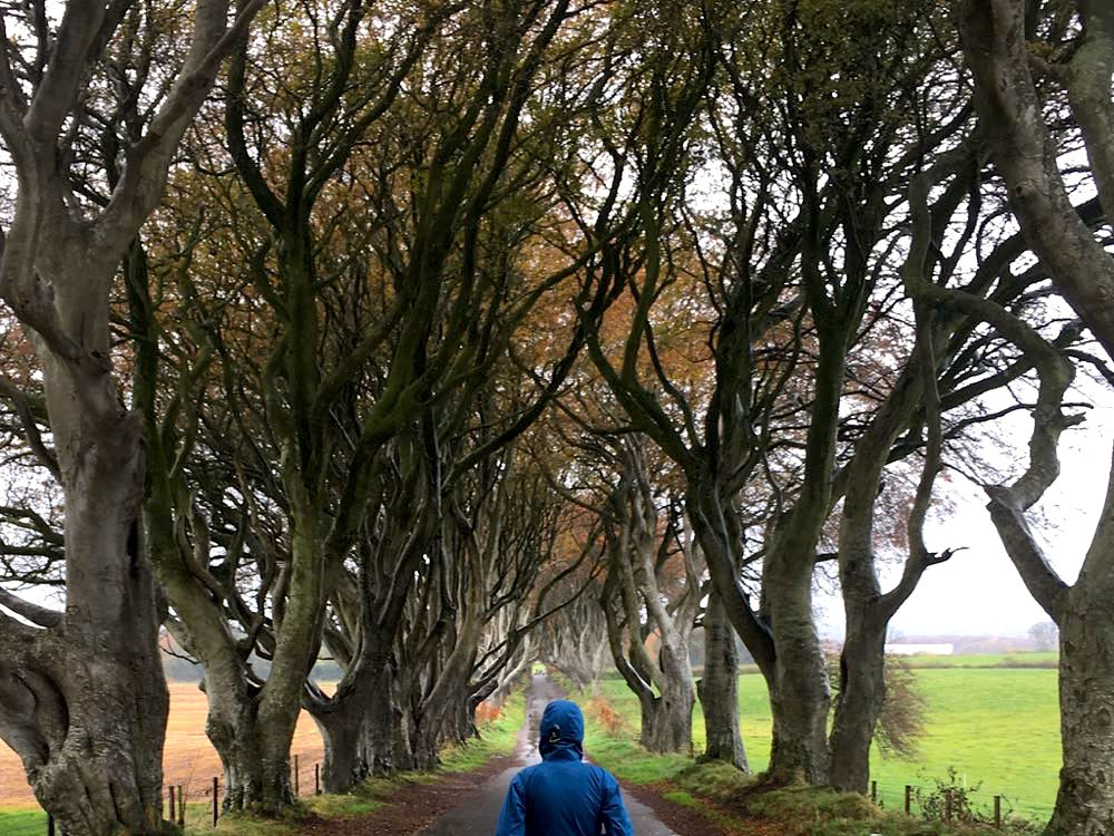 dark hedges nordirland 7 - Dark Hedges: Highlight in Nordirland