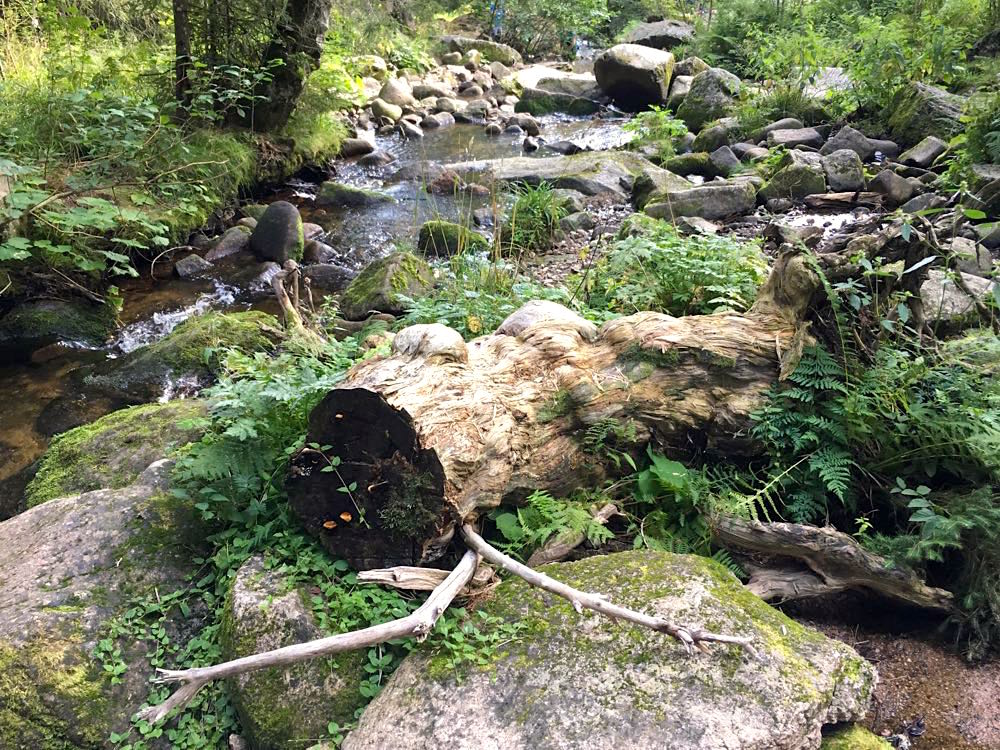 menzenschwander geissenpfad 13 - Menzenschwander Geißenpfad im Schwarzwald