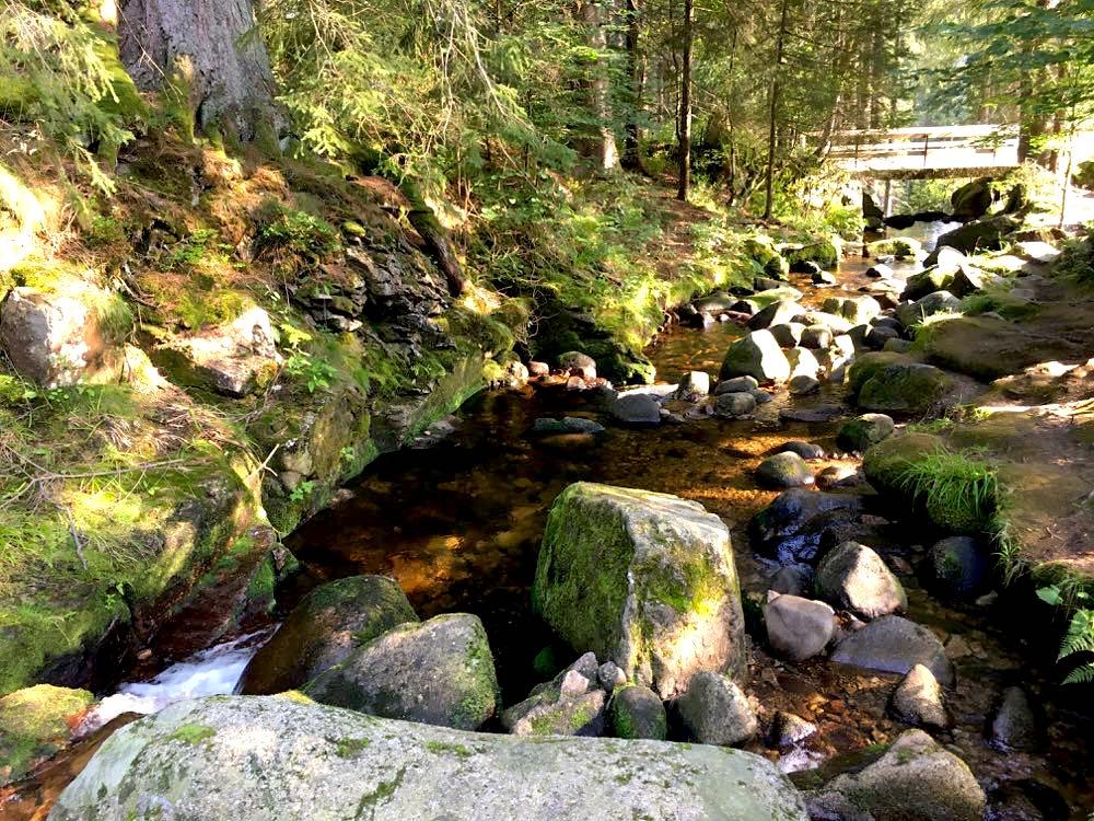 menzenschwander geissenpfad 9 - Menzenschwander Geißenpfad im Schwarzwald