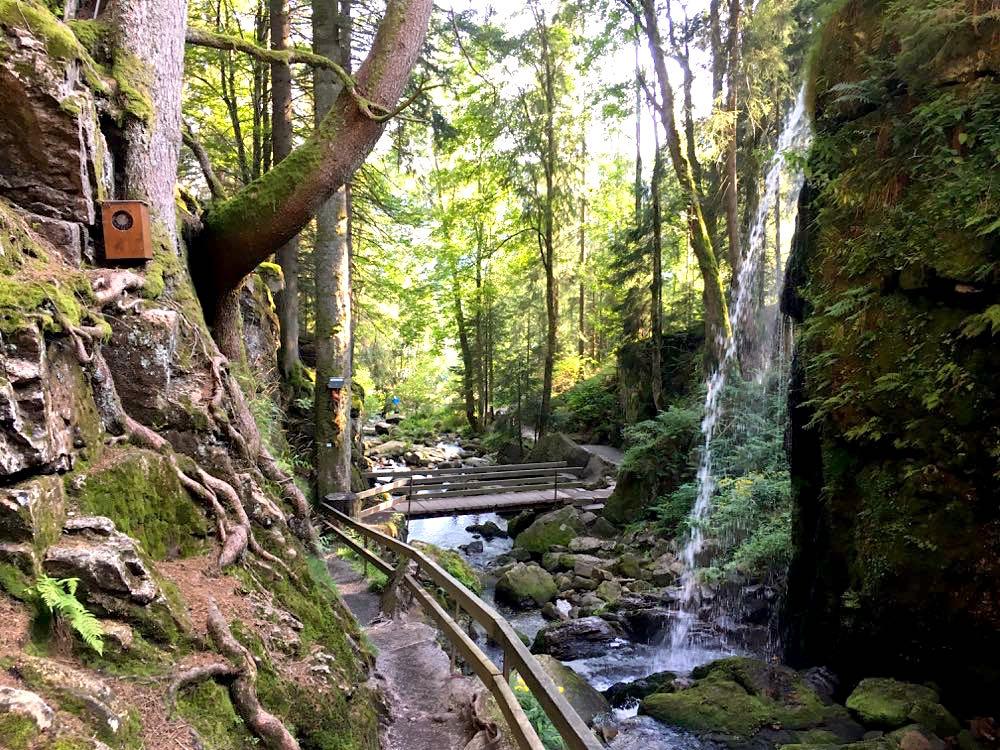 wanderungen schwarzwald pfaelzerwald 5 - 10 Wanderungen im Schwarzwald & Pfälzerwald