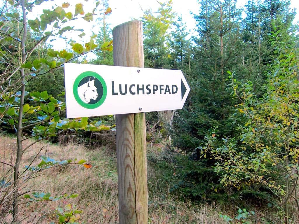 luchspfad baden baden schwarzwald 1 - Wanderung auf dem Luchspfad im Schwarzwald