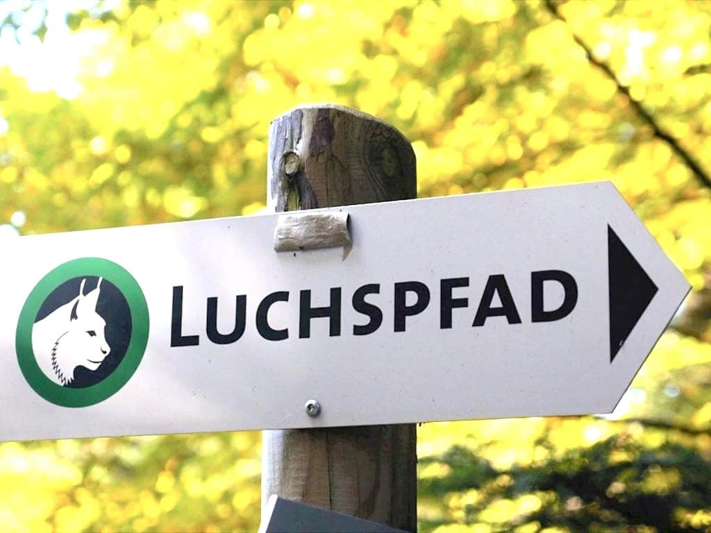 luchspfad baden baden schwarzwald 2 - Wanderung auf dem Luchspfad im Schwarzwald