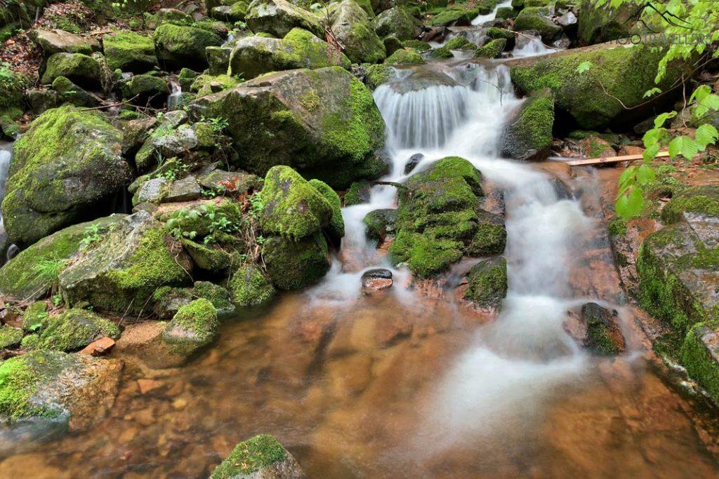 ausflugsziele schwarzwald ausfluege albsteig 1024x683 - Ausflugsziele Schwarzwald: Highlights für den Sommer