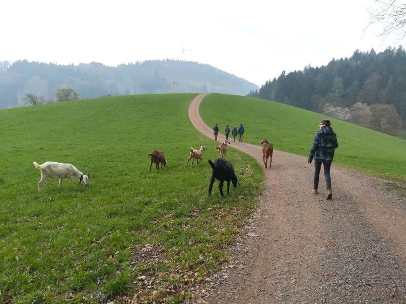 ausflugsziele schwarzwald ausfluege elztal wandern - Ausflugsziele Schwarzwald: Highlights für den Sommer