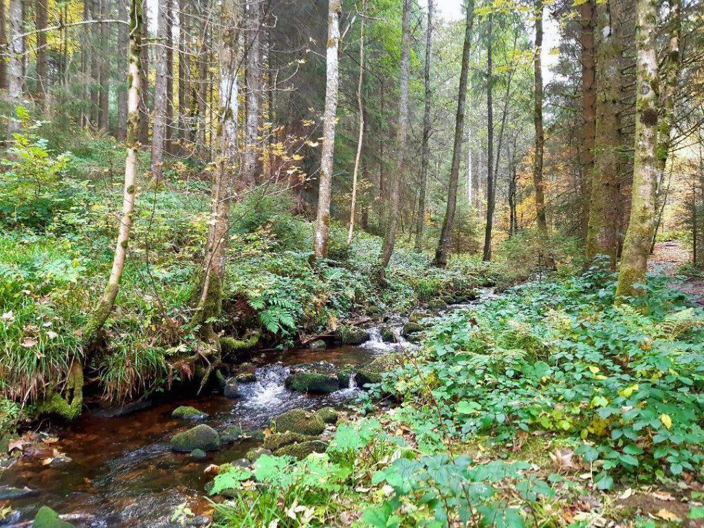 ausflugsziele schwarzwald ausfluege sankenbachsteig baiersbronn 1024x768 - Ausflugsziele Schwarzwald: Highlights für den Sommer