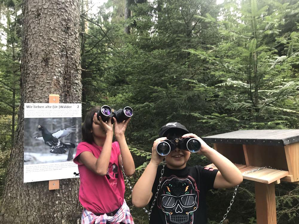 kaltenbronn auerhahnweg 1 - Kaltenbronn: 7 Schwarzwald-Tipps für Familien