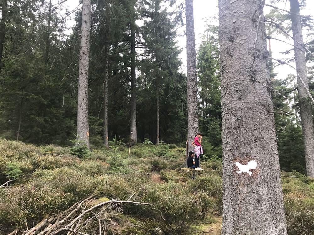 kaltenbronn auerhahnweg 2 - Kaltenbronn: 7 Schwarzwald-Tipps für Familien