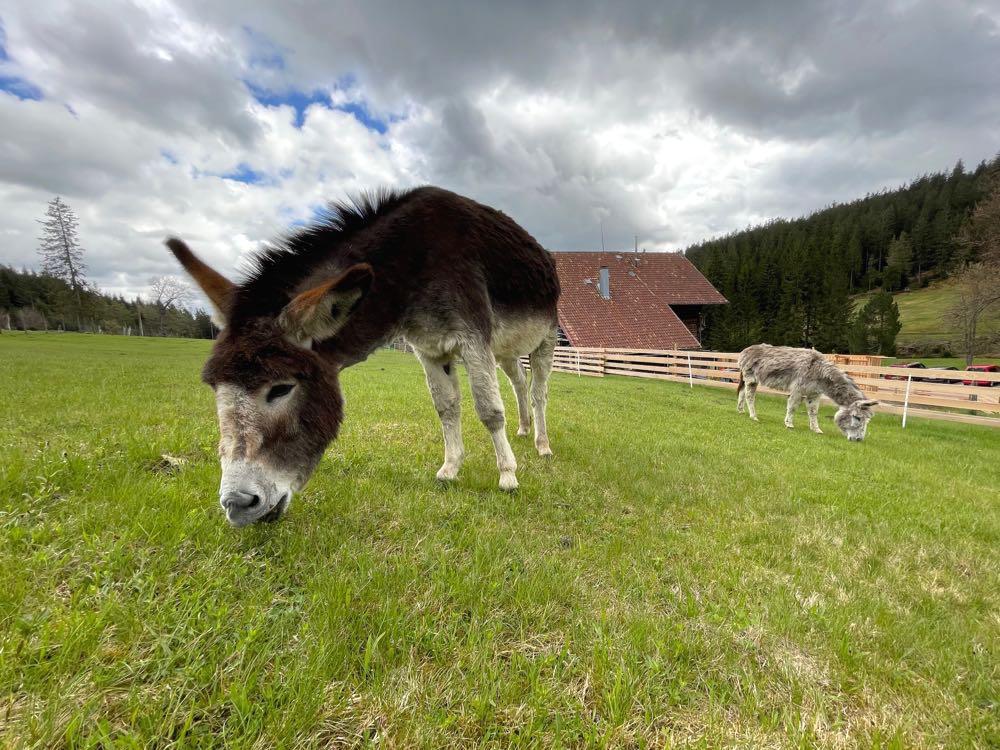 kaltenbronn esel - Kaltenbronn: 7 Schwarzwald-Tipps für Familien