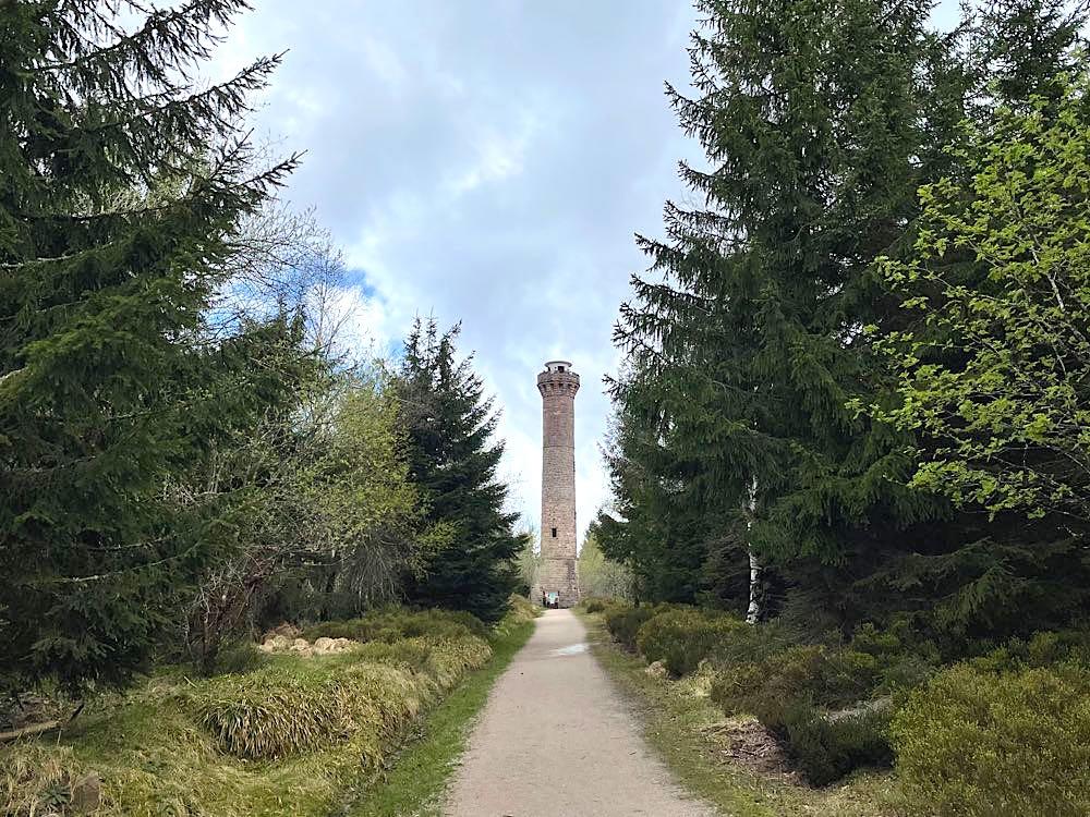kaltenbronn hohlohturm 3 1 - Kaltenbronn: 7 Schwarzwald-Tipps für Familien