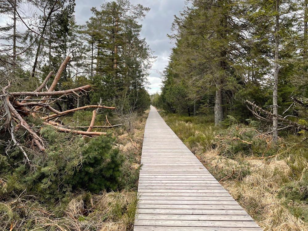 kaltenbronn naturerlebnisweg bohlenweg - Kaltenbronn: 7 Schwarzwald-Tipps für Familien