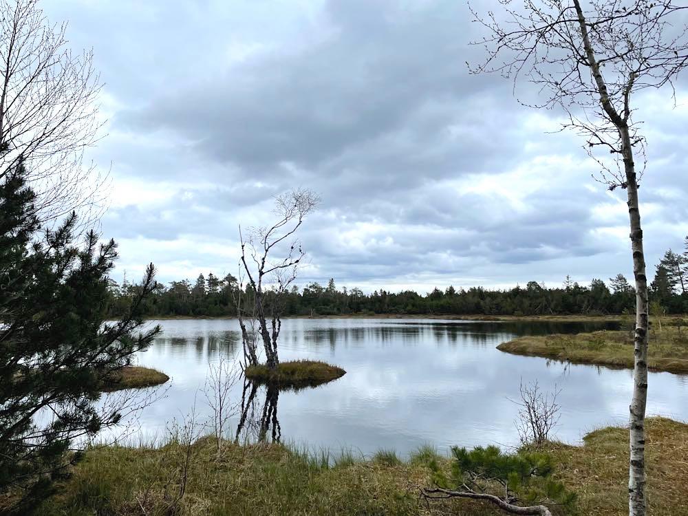 kaltenbronn wildsee 1 - Kaltenbronn: 7 Schwarzwald-Tipps für Familien