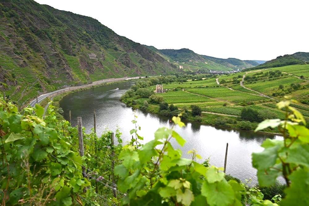 moselschleife bremm calmont mosel 10 - Moselschleife: Bremm, Calmont & Aussichtspunkt