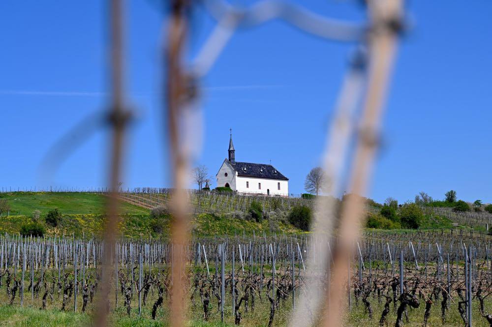 sehenswuerdigkeiten ausflugsziele rheinhessen 13 - Sehenswürdigkeiten & Ausflugsziele in Rheinhessen