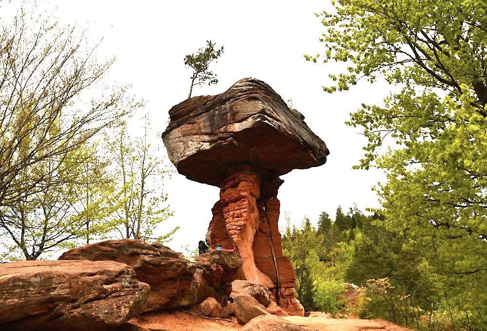 pfaelzerwald sehenswuerdigkeiten 1 - Pfälzerwald: Sehenswürdigkeiten & Ausflugsziele