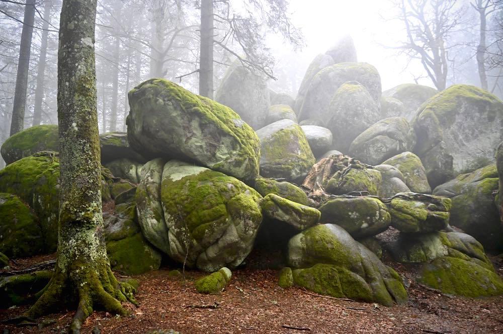wasserweltensteig schwarzwald 10 - Wasserweltensteig: Quellen, Bäche und Wasserfälle