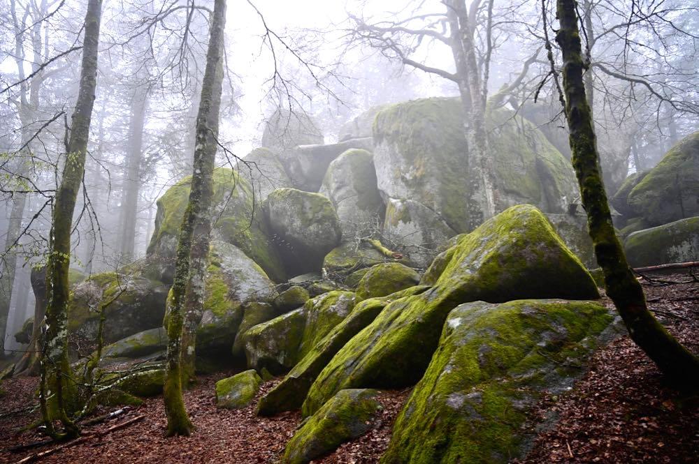 wasserweltensteig schwarzwald 11 - Wasserweltensteig: Quellen, Bäche und Wasserfälle