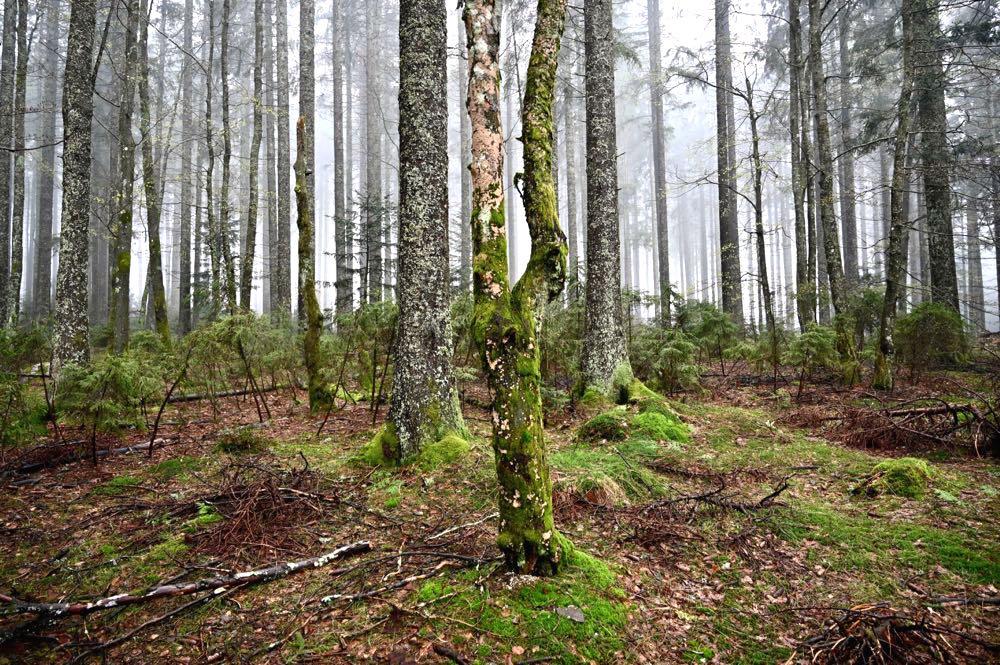 wasserweltensteig schwarzwald 14 - Wasserweltensteig: Quellen, Bäche und Wasserfälle