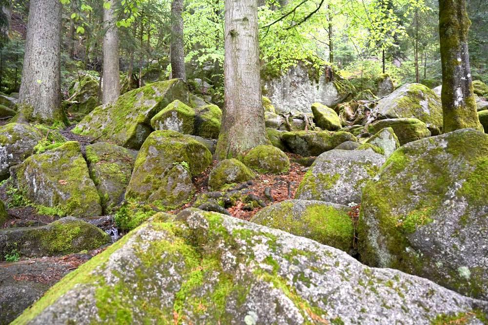 wasserweltensteig schwarzwald 19 - Wasserweltensteig: Quellen, Bäche und Wasserfälle
