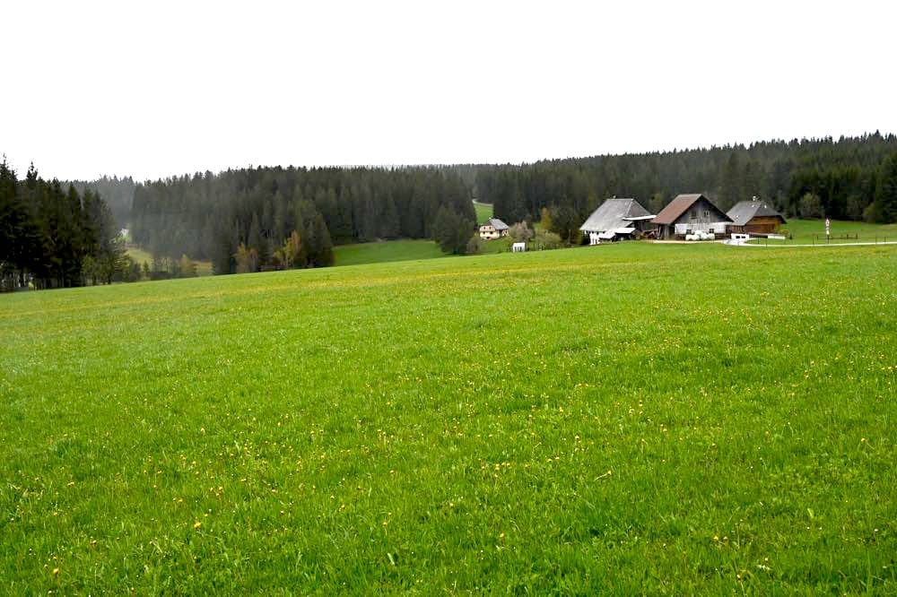 wasserweltensteig schwarzwald 20 - Wasserweltensteig: Quellen, Bäche und Wasserfälle