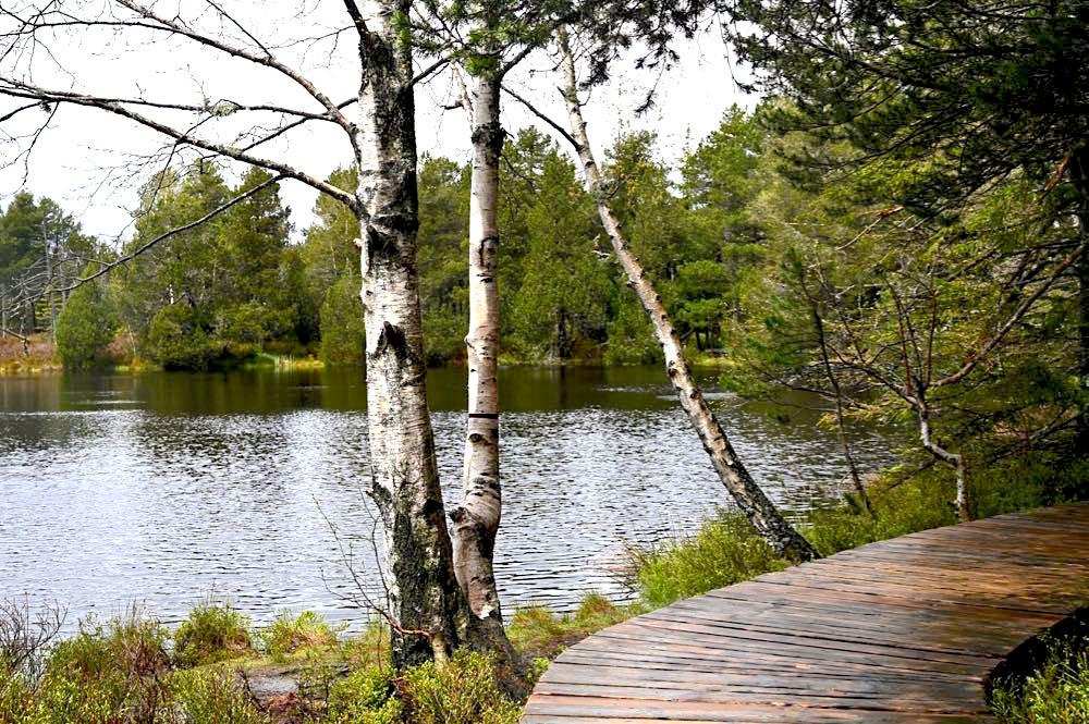 wasserweltensteig schwarzwald 26 - Wasserweltensteig: Quellen, Bäche und Wasserfälle