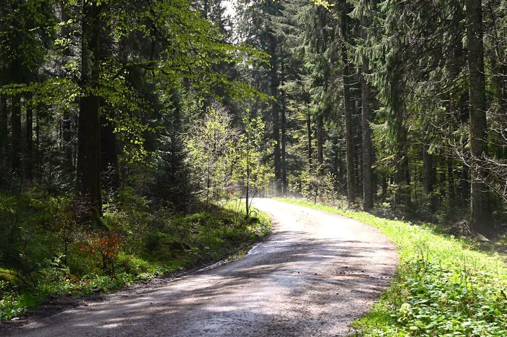 wasserweltensteig schwarzwald 28 - Wasserweltensteig: Quellen, Bäche und Wasserfälle