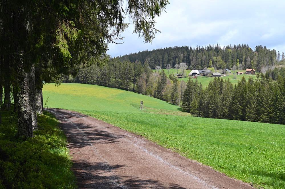 wasserweltensteig schwarzwald 3 - Wasserweltensteig: Quellen, Bäche und Wasserfälle
