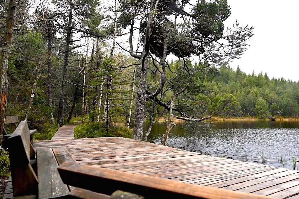 wasserweltensteig schwarzwald 30 - Wasserweltensteig: Quellen, Bäche und Wasserfälle