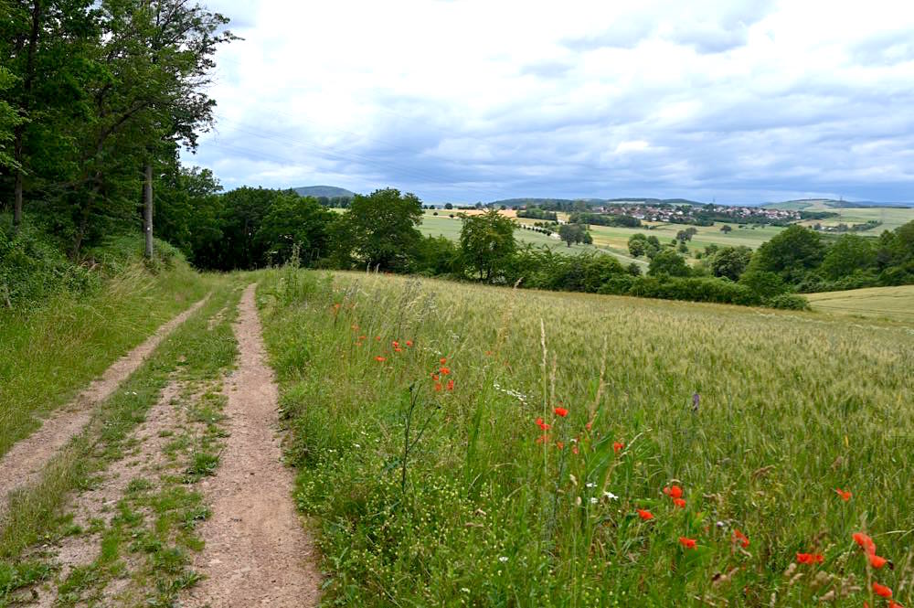 rotenfels rheingrafenstein nahe wandern 17 - Rotenfels & Rheingrafenstein - Wandern im Nahetal