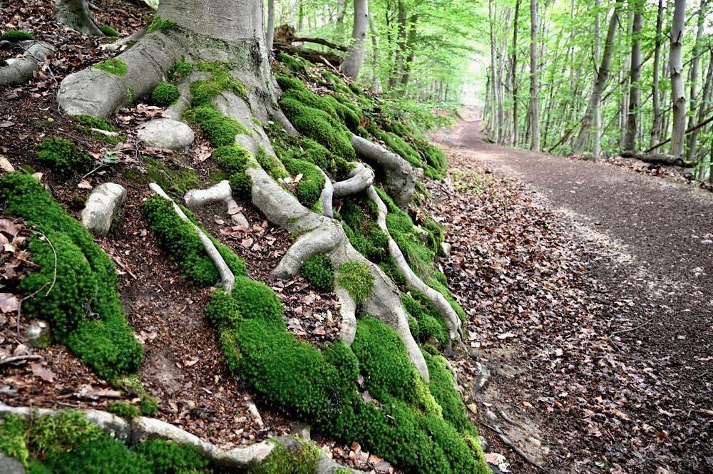 rotenfels rheingrafenstein nahe wandern 23 - Rotenfels & Rheingrafenstein - Wandern im Nahetal