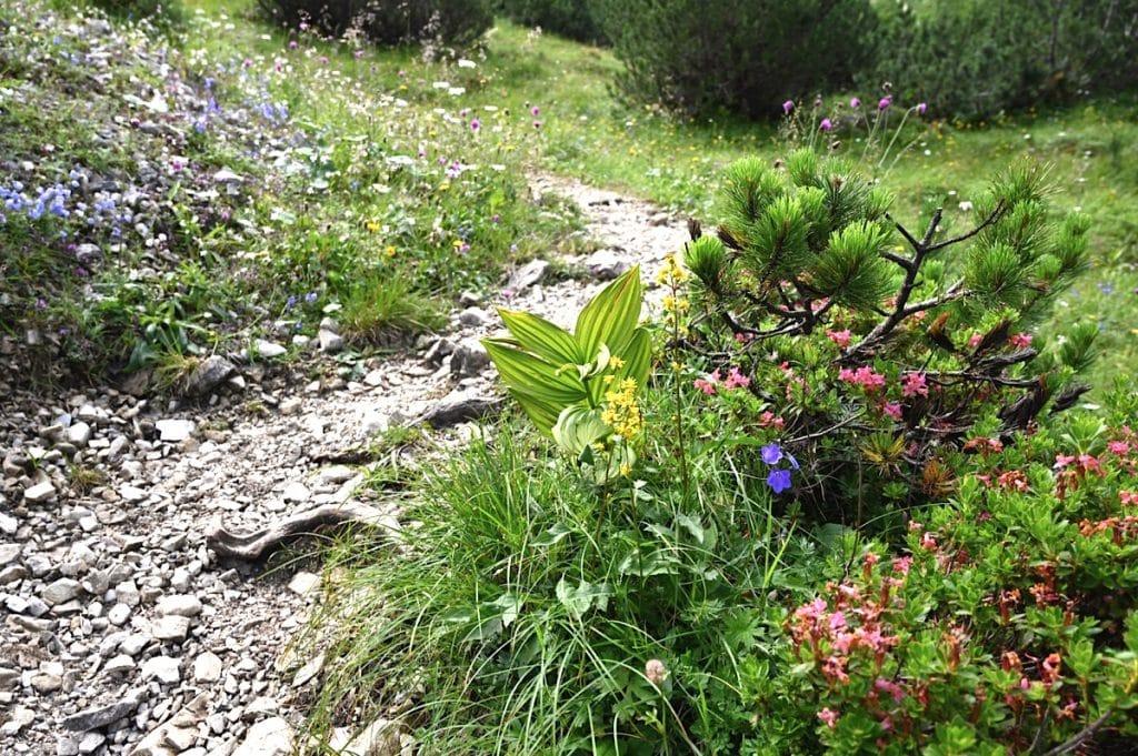 tannheimer tal wandern 13 1024x681 - Tannheimer Tal: Wandern, Hütten & Seen in Tirol