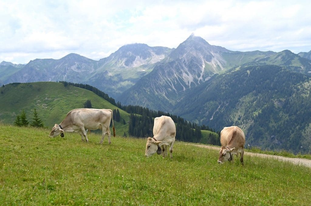 tannheimer tal wandern 2 1024x681 - Tannheimer Tal: Wandern, Hütten & Seen in Tirol