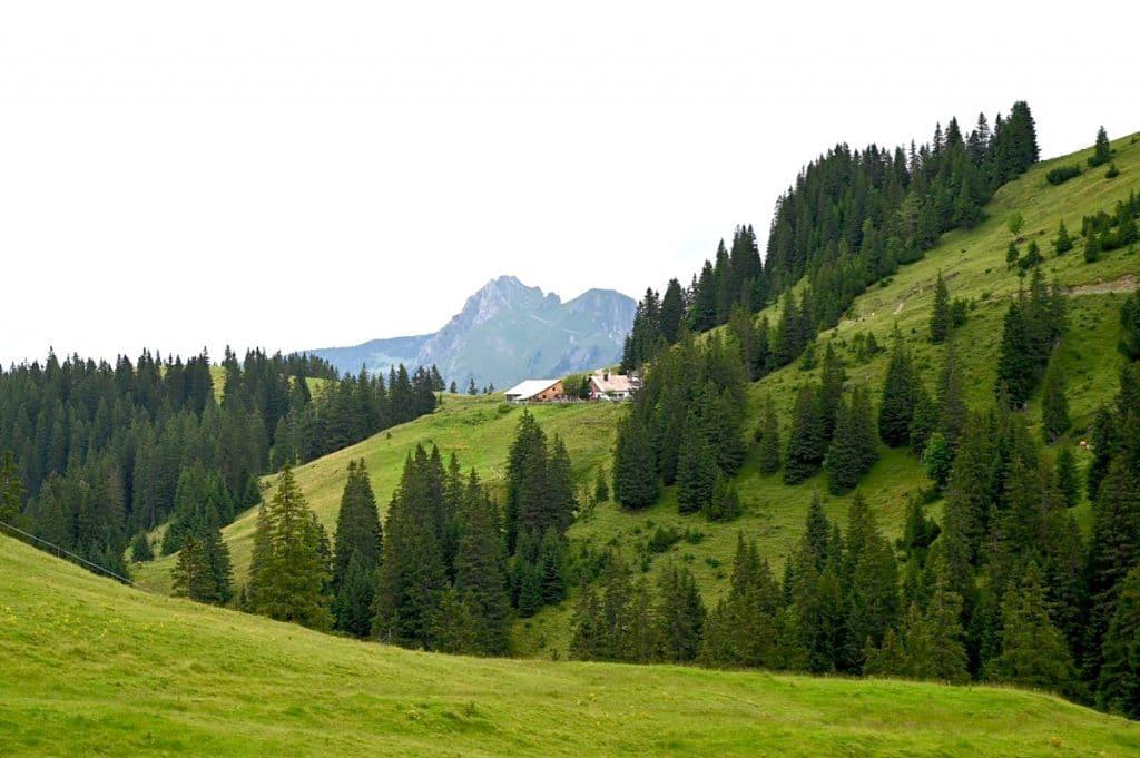 tannheimer tal wandern 23 1024x681 - Tannheimer Tal: Wandern, Hütten & Seen in Tirol