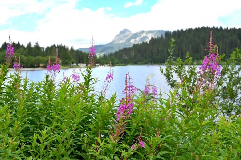 tannheimer tal wandern 24 1024x681 - Tannheimer Tal: Wandern, Hütten & Seen in Tirol