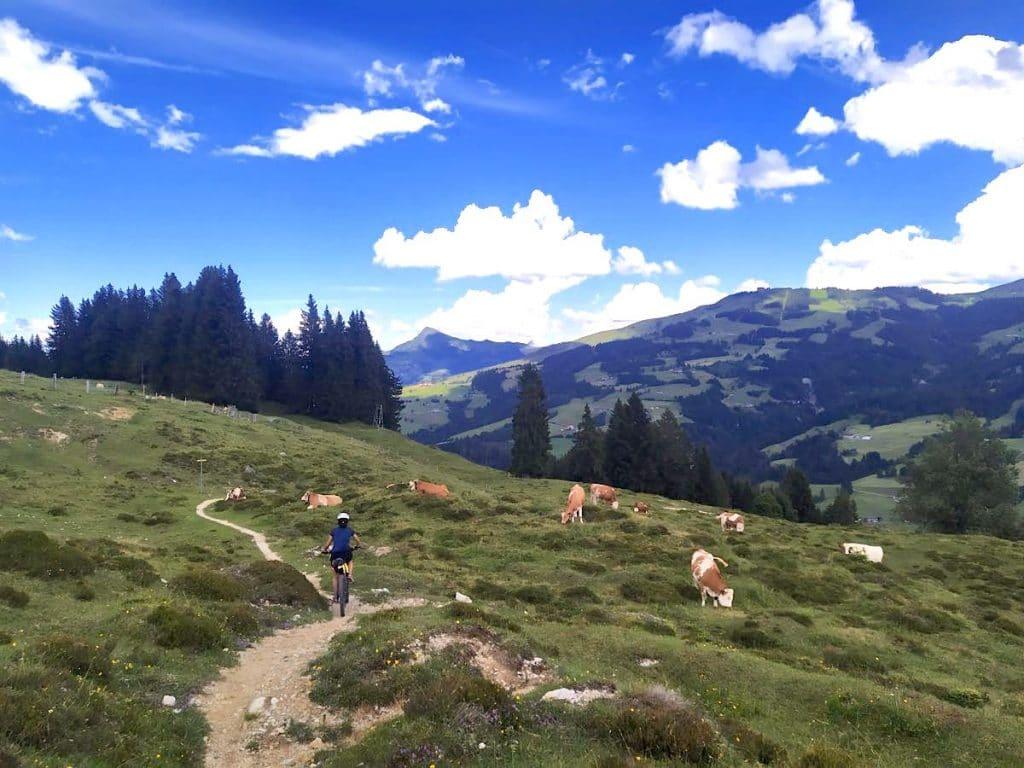 kitzbueheler alpen 13 1024x768 - Kitzbüheler Alpen: Mountainbiken in Tirol