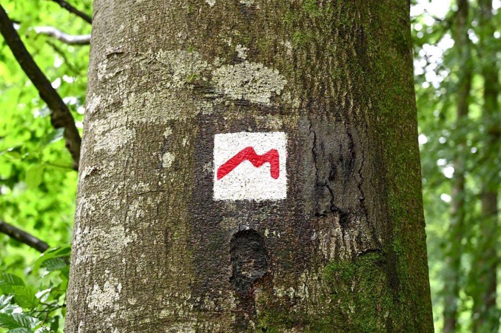 muellerthal luxemburgische schweiz 14 1024x681 - Müllerthal: Wandern in der luxemburgischen Schweiz